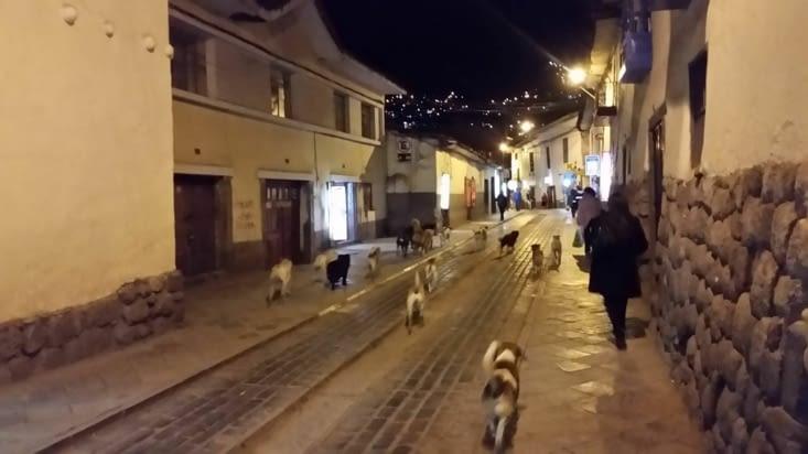Les chiens errants prennent possession de la ville la nuit après avoir dormi tout le jour