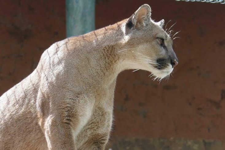 Profil Facebook du Puma