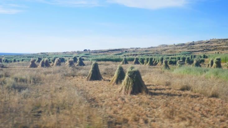 Les récoltes de paille ou de foin