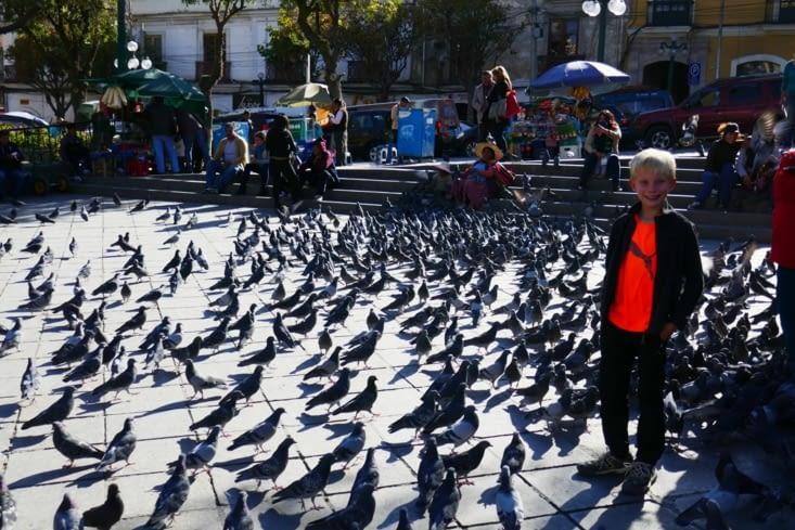 Des centaines de pigeons sont nourris sur cette place