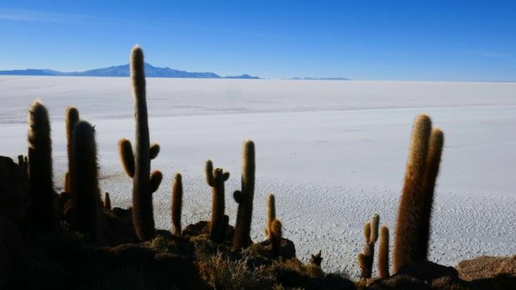 De majestueux cactus nous disent que c'est  une oasis