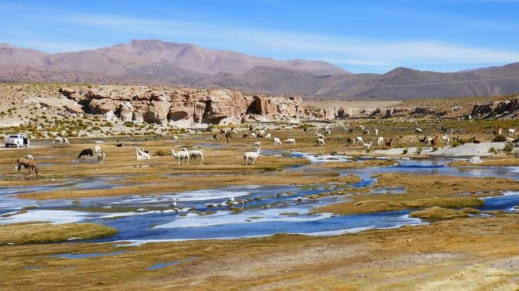 Halte dans un village où se trouve un important nid de lamas !