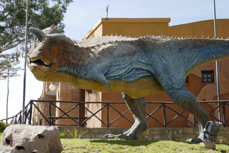Le carnotaurin:  8 m de long avec ses belles cornes (carnivore of course....)