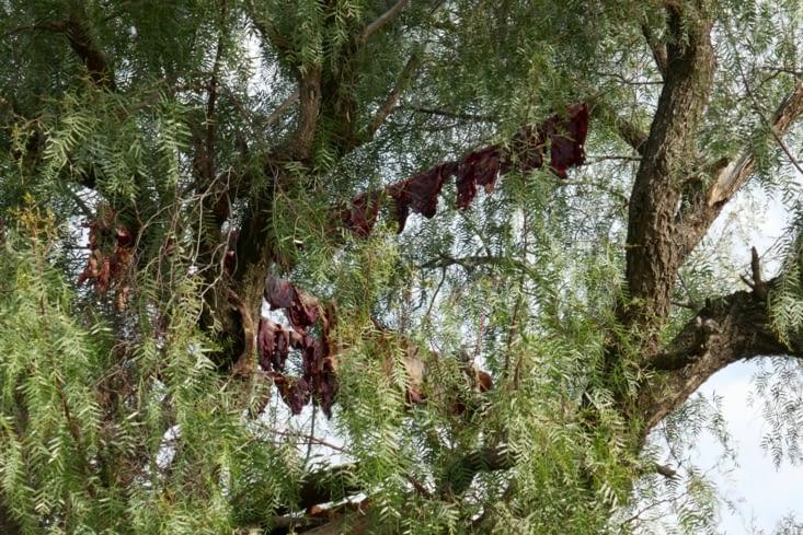 Près d'une maison isolée, nous voyons des choses suspendues dans l'arbre. ..