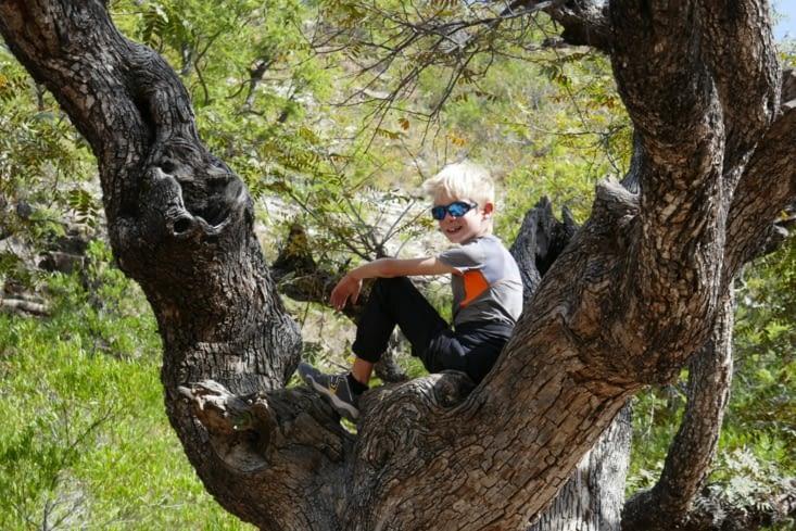 """Un """"vikingus grimpus"""", une espèce vivant essentiellement dans les arbres. .."""