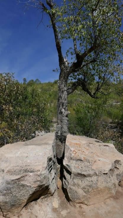 Le bois serait il plus dur que la pierre ?