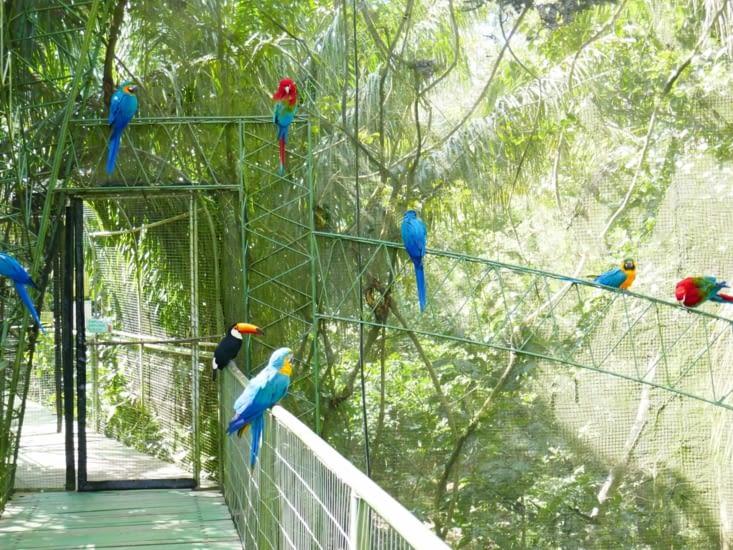 Et son bruyant comité d'accueil : toucan, aras (grands perroquets) et perruches