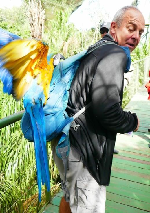 Soudain, un ara bleu se jette sur le sac à dos de Thierry