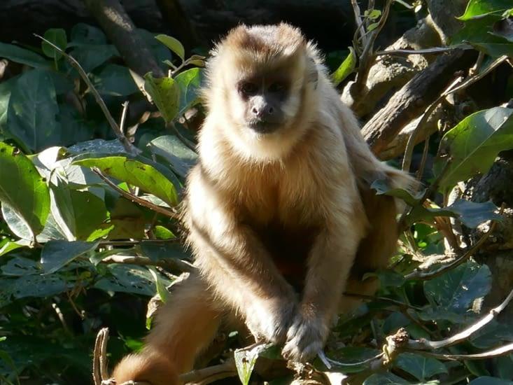 Tout une communauté de singes est présente sur une île au milieu d'un lac