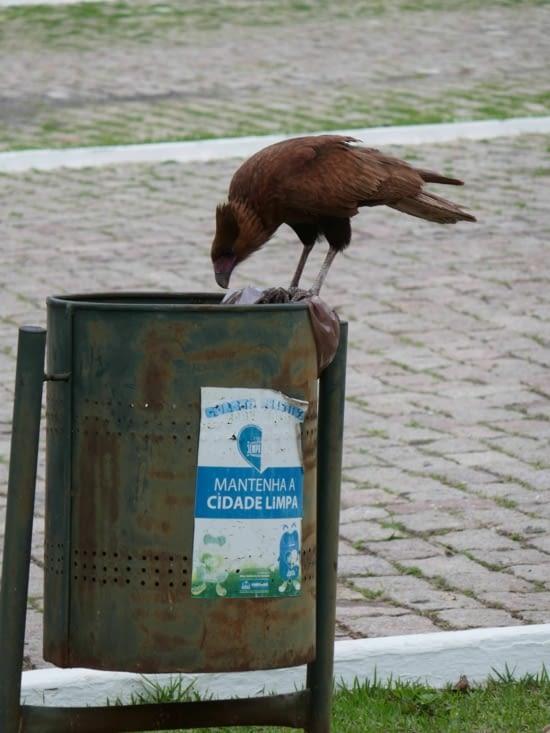 Un aigle vérifie s'il ne pourrait pas participer au recyclage. ..