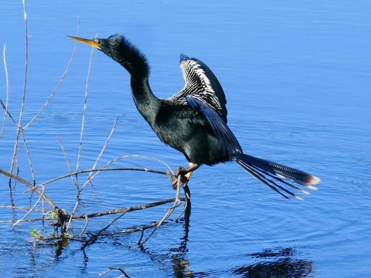 Un des nombreux oiseaux qui peuplent la région. ..