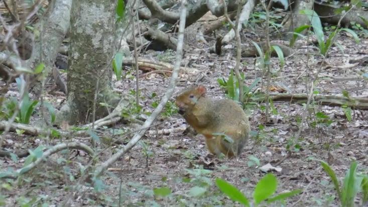 Une espèce d'écureuil