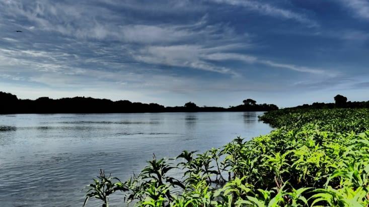 Un peu de mangrove