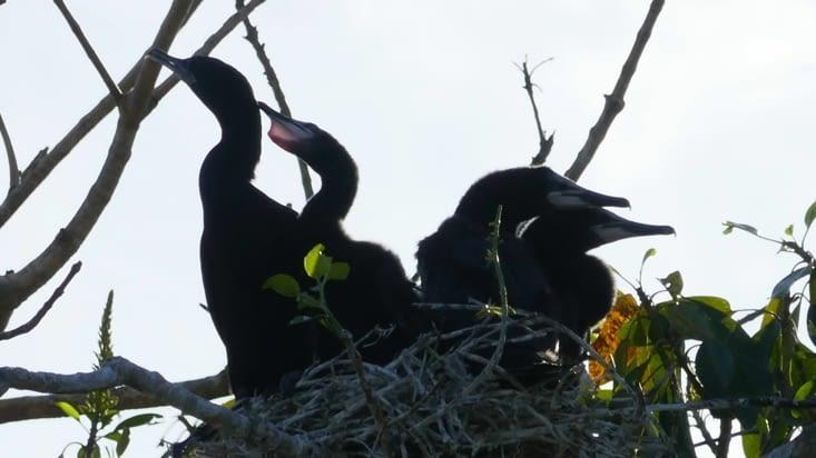 D'innombrables nids accueillent les petits