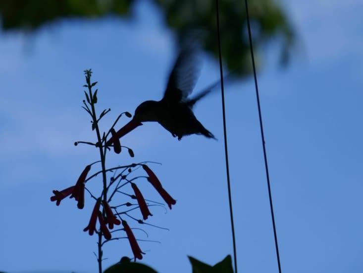 Mael a réussi à prendre ce colibri en photo