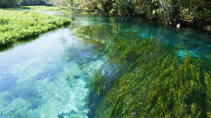 L'eau étant calcaire, elle est incroyablement transparente malgré un fort courant