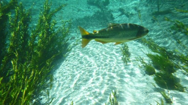 Nous évoluons avec des tonnes de poissons