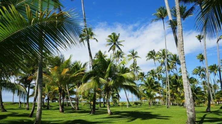 Une palmeraie occupe la majeure partie de l'espace