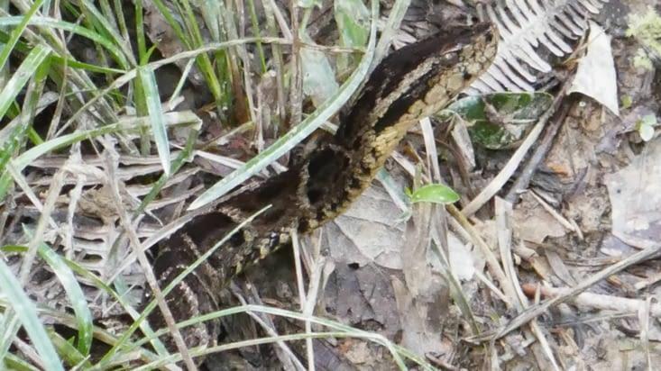 Le guide nous arrête brusquement : un serpent très dangereux se tapit dans le fourré !