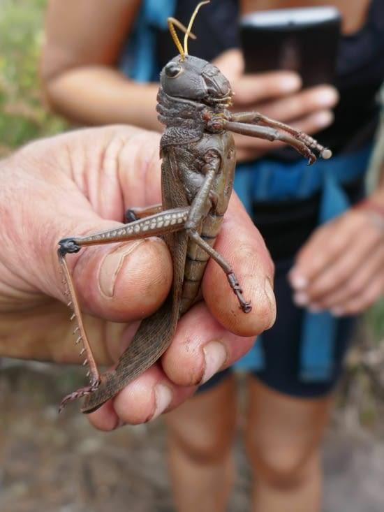 Yes, on a retrouvé Jiminy cricket !