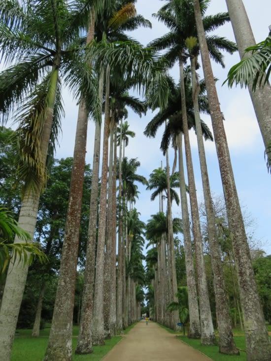 L'allée des palmiers