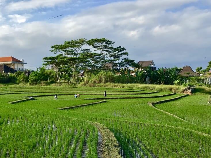 De belles petites rizières tout autour