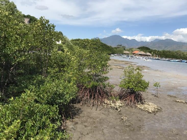 Mangroves en bordure de notre hôtel (photo prise à marée basse)