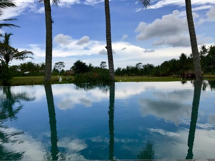 Entre ciel, palmier et rizière