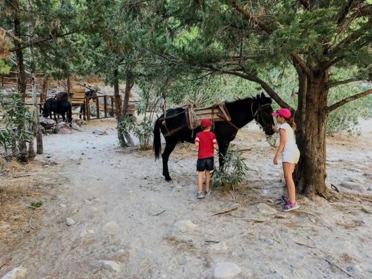 Les ânes de secours !