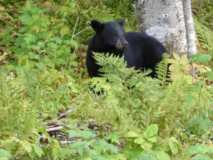 Et un petit ours !