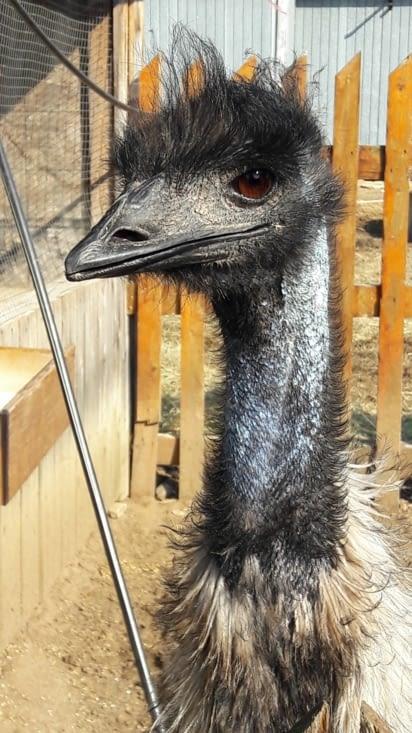 Un petit tour à la ferme avec la rencontre d'un Emeu