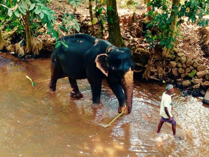 Sa majesté l'éléphant et son cornac... à l'heure du bain.