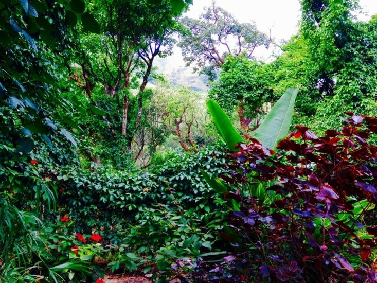 Au milieu de la jungle...