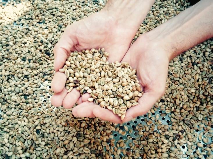 Les grains de café juste avant d'être grillés, ça sent bon !