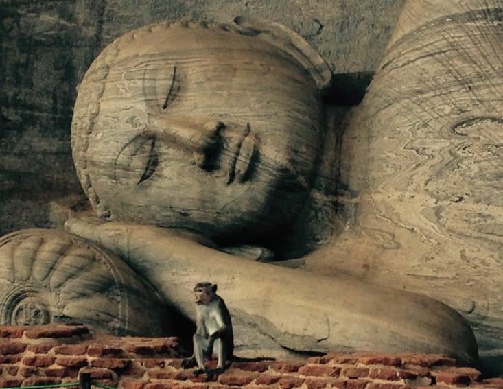 Au cœur de l'histoire du Sri Lanka, à Polonnaruwa
