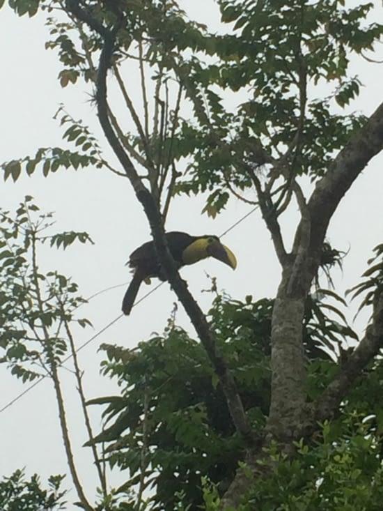 Pendant qu'on travaillait, le toucan nous surveillait !