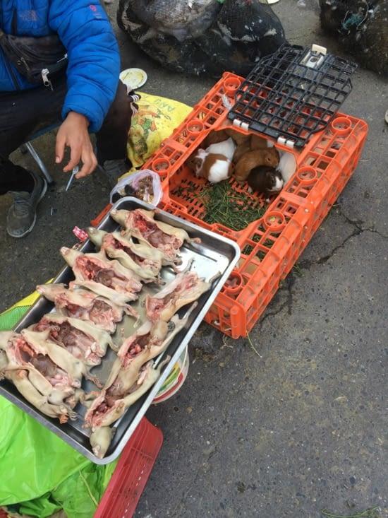 Les cochons d'inde du marché