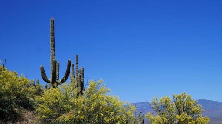 Et pour finir de bien jolis cactus