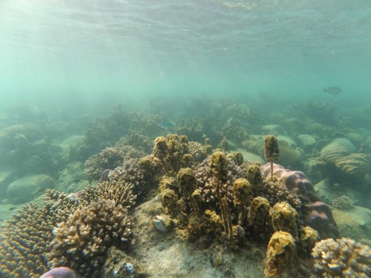 Petit souvenir du snorkelling