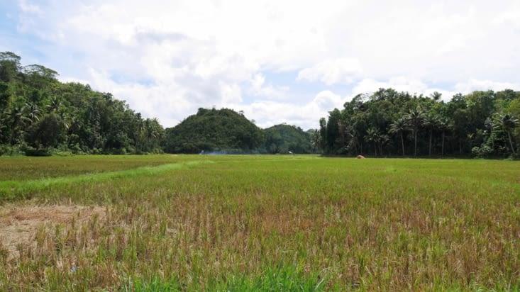La campagne de Bohol