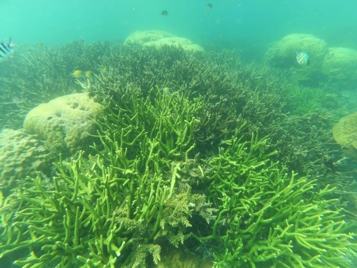 Admirez ces beaux coraux