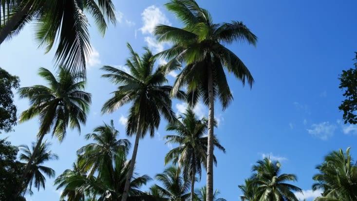 Sous les cocotiers...la plage