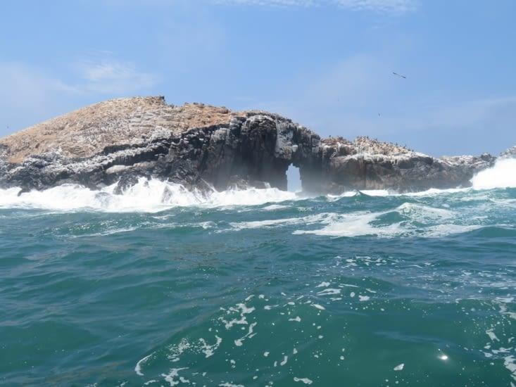 Les îles aux phoques