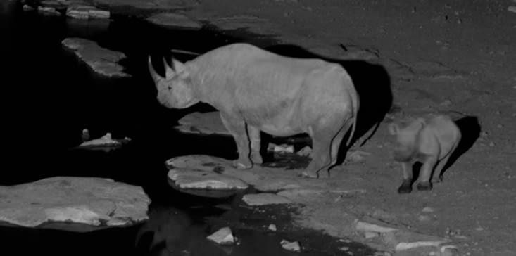 maman rhino et son petit