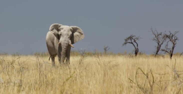 sa majesté l'éléphant