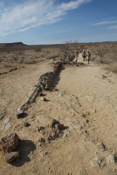 sur quelques hectares, des morceau de bois fossilisés