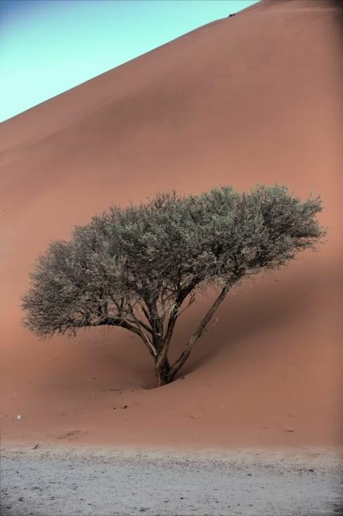 la dune mangeuse d'arbre
