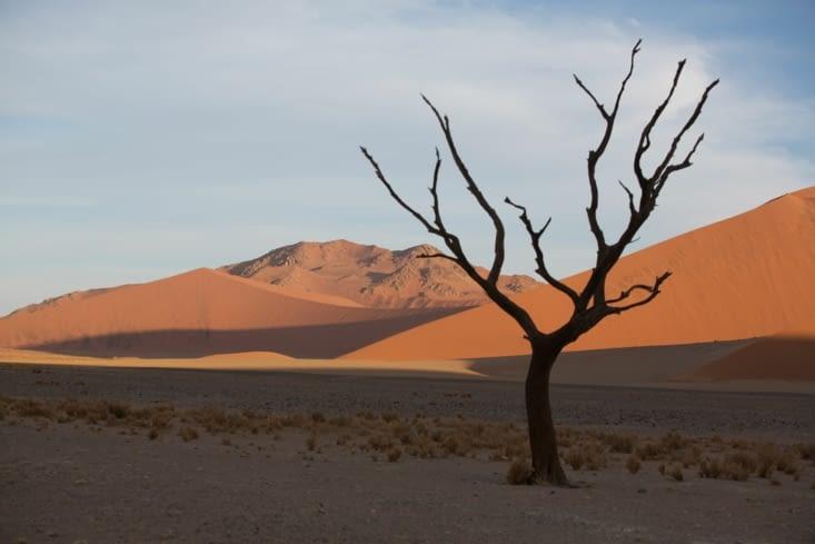 Tel un guetteur, ce squelette veille sur les dunes qui attendent la nuit