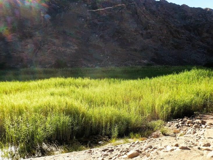 La végétation s'est adaptée et prospère dans de l'eau 'chaude'