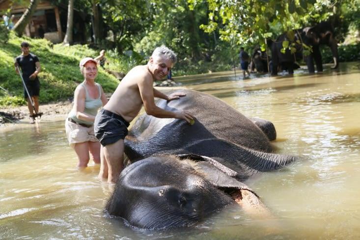 Grate grate à dos d'éléphant